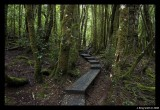Tasmanian Wilderness areas and National Parks