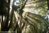 Floresta da Tijuca, Rio de Janeiro 0018