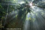 Floresta da Tijuca, Rio de Janeiro 5645 (1).jpg