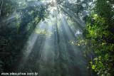 Floresta da Tijuca, Rio de Janeiro, RJ 5654