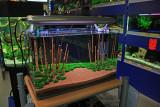 NatureSoil Bamboo Garden by Oliver Knott