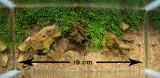 Elatine hydropiper by Anubias (Italy)