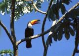 Birds of the Pantanal.