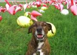 zelda in spring 07