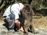 Christian meets a Baboon, Simien Mountains NP