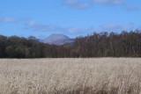 Ben Lomond and the Aber Bog, Loch Lomond NNR
