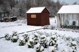 Winter scene at my garden allotment, Glasgow