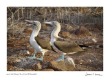 Galapagos Island Birds