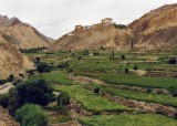 Barley fields, Lamayuru