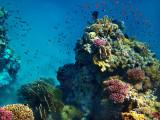 Red Sea Corals
