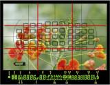 Viewfinder D300 - rule of thirds.jpg