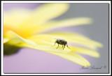 fleurs_007.jpg