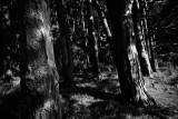 20080802 - Line of Trees
