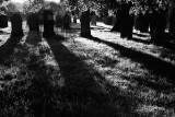 20080817 - Graves