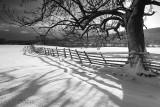20091218 - Shadowy Snow