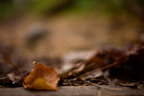20071110-4 - Err, a Leaf!