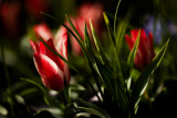 20080422 - Flowers