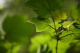 20080511 - Leaves