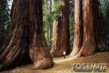 2007 - Yosemite National Park