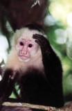 Costa Rica 2001