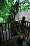 Giant Plant, Rainy Summer Night