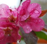 Drippy Flowers