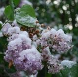 Snow Bouquet