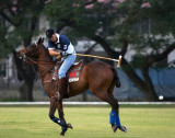 Polo and Show Jumping