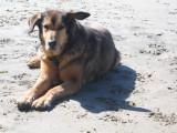 2009 Oregon Coast Road Trip