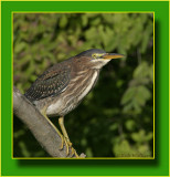 The Green Heron Gallery