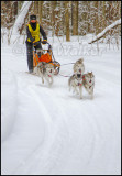 Once On The Trail The Real Work Begins For Both The Driver And Their Canine Athletes