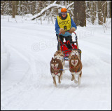 This Driver Is Running A Team Of Purebreed Siberian Huskies