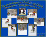 Sled Dog Race Collage And Sampling Of What One Can See Attending This Unique Sporting Event