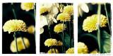 Bouquet 3 Views