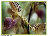Orchid (border technique #1)