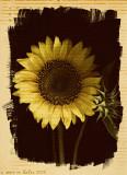 Sunflower (border technique #2)