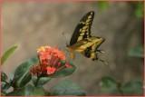Butterflies, Dragonflies, and Other Little Critters