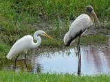 Herons, ibis & storks