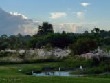 Florida preserve