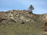 B.L.M. - Little Chopaka Mountain