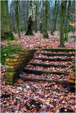 Steps and trees - Stoke Forest