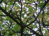 Apple Tree Leaves in Autumn