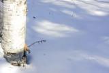 Sun, Shadow and Snow
