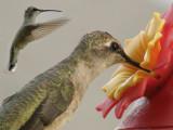 A hummingbird composite.