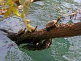 The Turtle Brigade