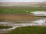 Krajobrazy biebrzańskie(IMG_6500.jpg)