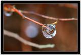 20071103 / Raindrop
