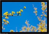 Color of spring - No 1