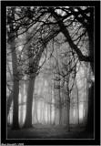 Morning forest fog