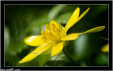 More yellow flower